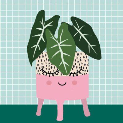 olifantsoor plant postkaart